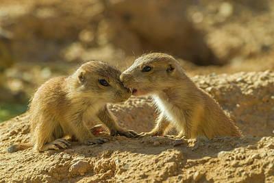 Prairie Dogs Photograph - Usa, Arizona, Arizona-sonora Desert by Jaynes Gallery