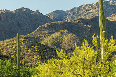 Usa, Arizona, Coronado National Forest Print by Jaynes Gallery