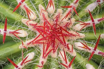 Usa, Arizona, Tucson Art Print