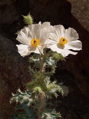 Anza-borrego Desert Photograph - Usa, California, Anza-borrego Desert by Ann Collins