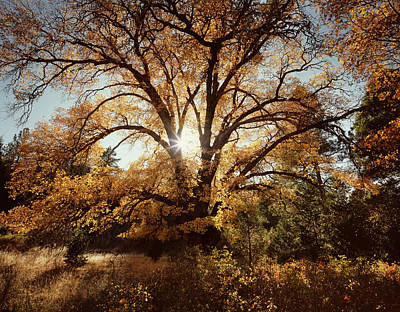 Quercus Photograph - Usa, California, Cleveland National by Christopher Talbot Frank