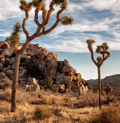 Hemingway Photograph - Usa, California, Joshua Tree National by Ann Collins