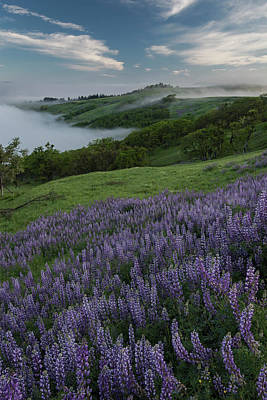 Judith Photograph - Usa, California View From Bald Hills by Judith Zimmerman