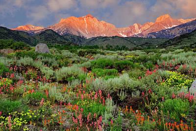 Sierra Mountain Photograph - Usa, California Wildflowers And Sierra by Jaynes Gallery