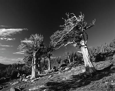 Arapaho Photograph - Usa, Colorado, Arapaho National Forest by Adam Jones