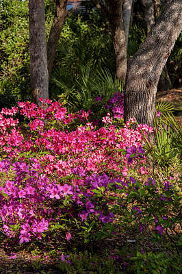 Florida Flowers Photograph - Usa, Florida, Edgewater, Edgewater by Lisa S. Engelbrecht