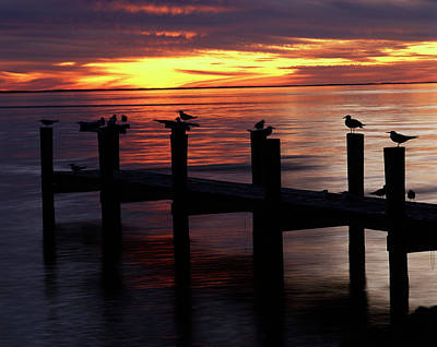 Large Format Photograph - Usa, Fort Myers, View Of Birds On Pier by Adam Jones