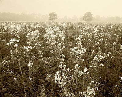 Usa, Kentucky, Late Summer Field Art Print