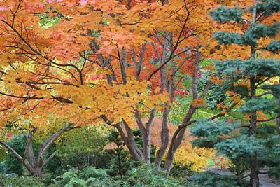 Vivid Fall Colors Photograph - Usa, Oregon, Ashland by Jaynes Gallery