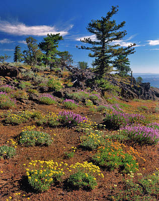 Eriogonum Photograph - Usa, Oregon, Wallowa-whitman National by Jaynes Gallery