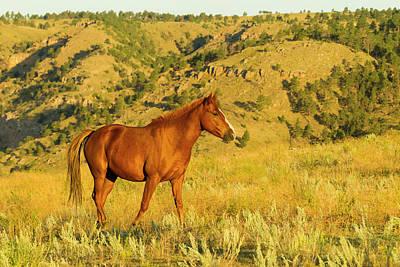 Usa, South Dakota, Wild Horse Sanctuary Art Print