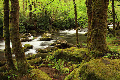 Little River Photograph - Usa, Tennessee, Great Smoky Mountain by Joanne Wells