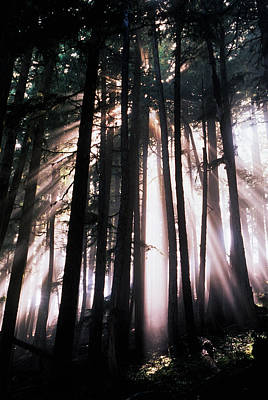 Adam Photograph - Usa, Washington, Mount Rainier National by Adam Jones