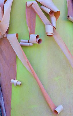 Exfoliate Photograph - Usa, Washington, Port Townsend by Jaynes Gallery