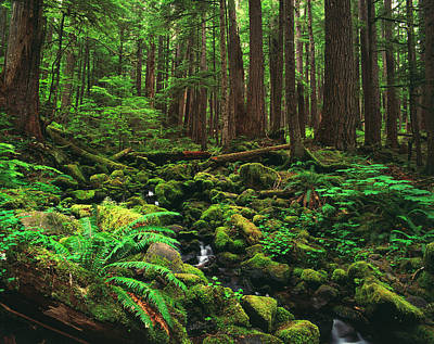 Olympic National Park Photograph - Usa, Washington State, View Of Olympic by Stuart Westmorland