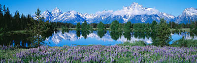 Conifer Tree Photograph - Usa, Wyoming, Grand Teton Park by Panoramic Images