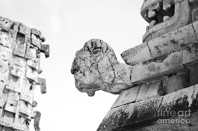 Photograph - Uxmal Mayan Ancient Turtle Glyph Profile Black And White by Shawn O'Brien