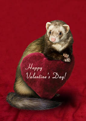 Photograph - Valentine's Day Ferret by Jeanette K