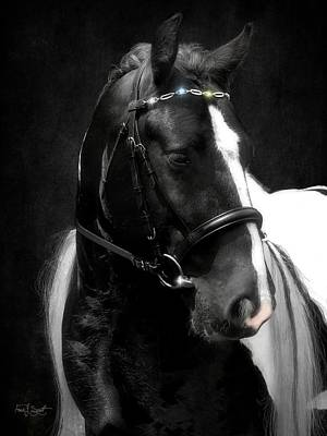 Of Horses Photograph - Valentino's Bling by Fran J Scott