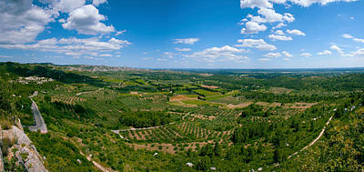 Provence Photograph - Valley With Olive Trees And Limestone by Panoramic Images