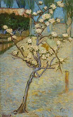 Pear Tree Painting - Van Gogh Peartree, 1888 by Granger