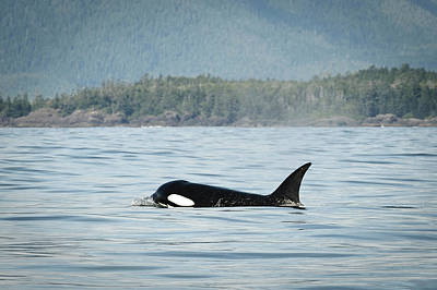 Freedmen Photograph - Vancouver Island, Clayoquot Sound by Matt Freedman