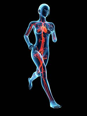 Jogger Wall Art - Photograph - Vascular System Of A Runner by Sebastian Kaulitzki