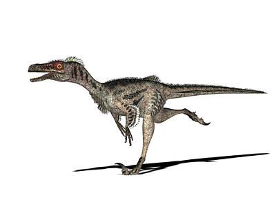 Velociraptor Dinosaur Art Print by Friedrich Saurer