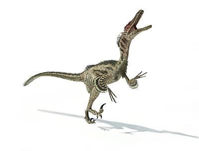 Prehistorical Photograph - Velociraptor Dinosaur by Leonello Calvetti