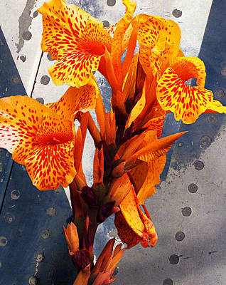 So. Cal Wall Art - Photograph - Ventura Flower by Ron Regalado
