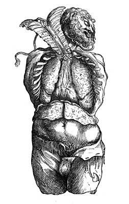 Photograph - Vesalius: Thoracic Cavity by Granger