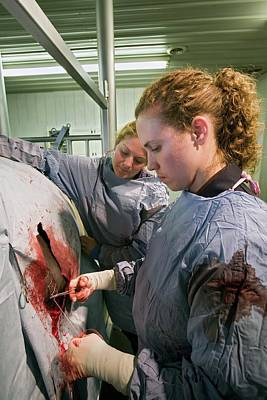 Closing Photograph - Veterinarians Operating On A Cow by Jim West