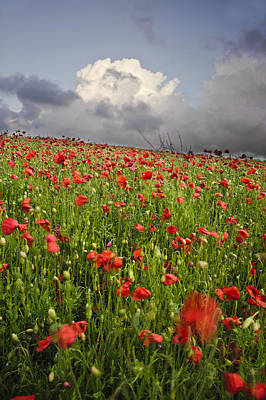 Vibrant Poppy Fields Under Moody Dramatic Sky Art Print
