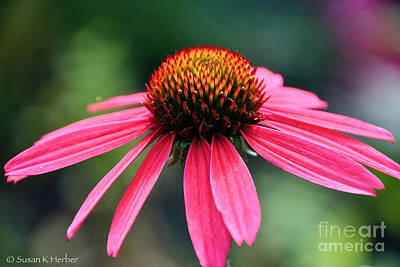 Photograph - Vibrant Summer by Susan Herber