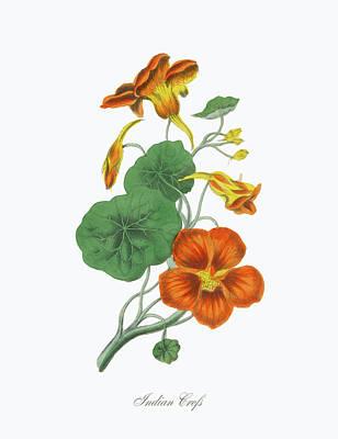 Victorian Botanical Illustration Of Art Print by Bauhaus1000