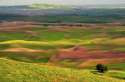 View Of Palouse From Steptoe Butte Art Print