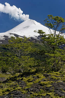 Green Chile Photograph - Villarrica National Park, Chile by Scott T. Smith