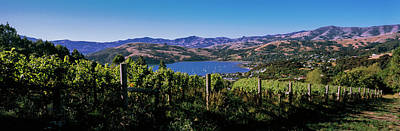 Winemaking Photograph - Vineyard, Akaroa Harbour, Banks by Panoramic Images