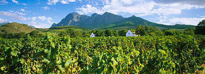 Winemaking Photograph - Vineyard In Front Of Mountains by Panoramic Images