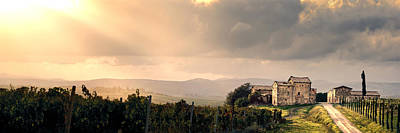 Vineyard In Tuscany Italy Art Print by Robert Leon