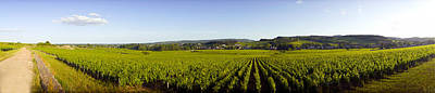 Winemaking Photograph - Vineyard, Mercurey, France by Panoramic Images