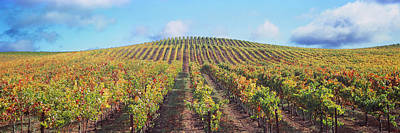 Winemaking Photograph - Vineyard, Napa Valley, California, Usa by Panoramic Images