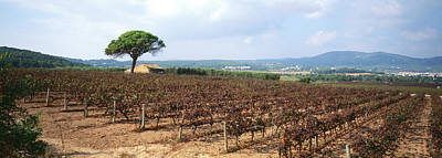 Winemaking Photograph - Vineyard, Sitges, Barcelona, Catalonia by Panoramic Images