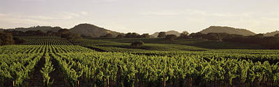 Sonoma County Photograph - Vineyard With Mountains by Panoramic Images