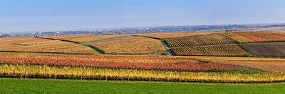 Winemaking Photograph - Vineyards In Autumn Near Gleisweiler by Panoramic Images