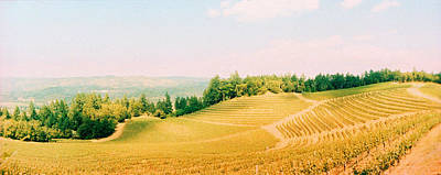 Napa Valley Photograph - Vineyards In Spring, Napa Valley by Panoramic Images