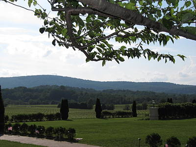 Winery Photograph - Vineyards In Va - 12124 by DC Photographer