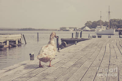 Photograph - Vintage Bird Walking Along A Beach Promenade by Jorgo Photography - Wall Art Gallery
