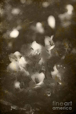 Photograph - Vintage Floral Background by Jorgo Photography - Wall Art Gallery