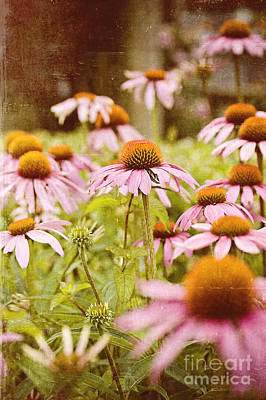 Old Time Feel Photograph - Vintage Flowers  by Michael Ver Sprill